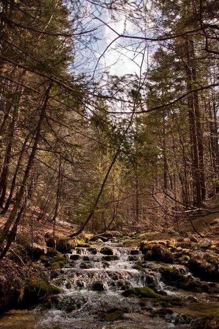 Vojsko Forest